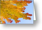 The Lightning Man Greeting Cards - Colorful Autumn Reaching Out Greeting Card by James Bo Insogna
