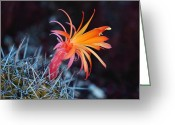 Succulents Greeting Cards - Colorful Cactus Flower Greeting Card by Rona Black