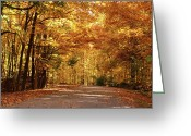 Indiana Autumn Photo Greeting Cards - Colorful Canopy Greeting Card by Sandy Keeton