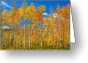 Landscape Posters Greeting Cards - Colorful Colorado Autumn Landscape Greeting Card by James Bo Insogna
