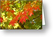 Red Autumn Trees Greeting Cards - COLORFUL FALL LEAVES RED NATURE Landscape Baslee Troutman Greeting Card by Baslee Troutman Art Prints Collections