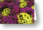 Tuileries Greeting Cards - Colorful flowers blooming during autumn in the Tuileries Garden Greeting Card by Sami Sarkis