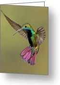 Flying Greeting Cards - Colorful Humming Bird Greeting Card by Image by David G Hemmings