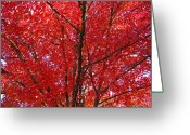 Red Leaves Greeting Cards - COLORFUL Red Orange FALL Tree Leaves Art Prints Autumn Greeting Card by Baslee Troutman Fine Art Prints Collections