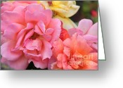 Colorful Roses Greeting Cards - Colorful Roses Greeting Card by Carol Groenen