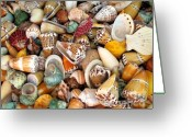Selection Greeting Cards - Colorful Shells Greeting Card by Yali Shi