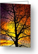 Sunset Posters Greeting Cards - Colorful Silhouette Greeting Card by James Bo Insogna