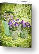 Sunlight Greeting Cards - Colorful spring flowers on garden chair Greeting Card by Sandra Cunningham