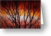 Sunset Posters Greeting Cards - Colorful Tree Branches Greeting Card by James Bo Insogna