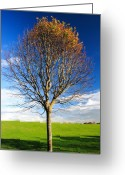 Blue Leaves Greeting Cards - Colorful tree  Greeting Card by Pierre Leclerc