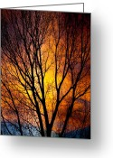Sunset Posters Greeting Cards - Colorful Tree Silhouettes Greeting Card by James Bo Insogna