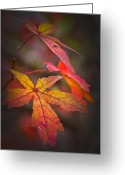 Natures Beauty Greeting Cards - Colors Greeting Card by Karol  Livote