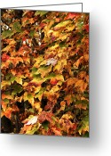 Colors Of Autumn Greeting Cards - Colors of Autumn Greeting Card by John Rizzuto
