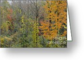 Linda Seacord Greeting Cards - Colors of Fall Greeting Card by Linda Seacord