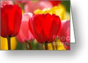 Flower Picture Greeting Cards - Colors of spring Greeting Card by Angela Doelling AD DESIGN Photo and PhotoArt