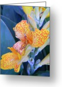 Canna Greeting Cards - Colors of the Canna Lily Greeting Card by Warren Thompson