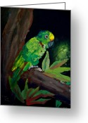 Rain Forrest Greeting Cards - Colors of the Parrot Greeting Card by Mike Grubb