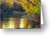 Mississippi River Scene Greeting Cards - Columbia Bottoms Slough II Greeting Card by Greg Matchick