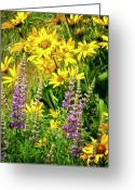 Balsamroot Greeting Cards - Columbia Gorge Wildflowers Greeting Card by Albert Seger