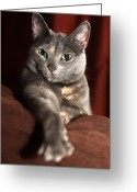 Kitty Greeting Cards - Come here Greeting Card by Amanda Barcon