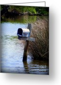 Flooded Greeting Cards - Come Rain or Shine or Boat Greeting Card by Karen Wiles