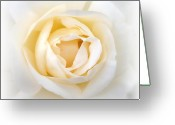 Rose Photos Greeting Cards - Come With Me To Dreamland Greeting Card by Kathy Bucari