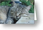 Feline Greeting Cards - Comfortable Greeting Card by Dean Caminiti