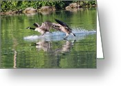 Erie Barge Canal Greeting Cards - Coming in for a landing Greeting Card by Heather Maitland-Schmidt