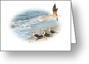 Seafoam Greeting Cards - Coming In for a Landing Greeting Card by Kristin Elmquist