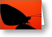 Eavning Greeting Cards - Common blue in sunset Greeting Card by Rikard  Olsson