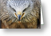 Buzzard Photo Greeting Cards - Common Buzzard Greeting Card by Chris Hellier