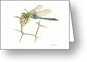 Insect Drawings Greeting Cards - Common Green Darner Greeting Card by Logan Parsons
