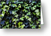 Common Greeting Cards - Common ivy Greeting Card by Fabrizio Troiani