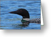 Baxter Park Greeting Cards - Common Loon Greeting Card by Bruce J Robinson