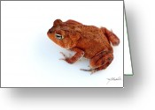 Toad Greeting Cards - Common Yard Toad Greeting Card by Melissa Wyatt