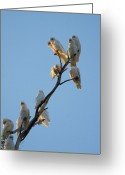 Flock Greeting Cards - Communa-Tree Greeting Card by Mike  Dawson