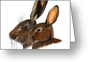 Hare Drawings Greeting Cards - Comparison hare rabbit ears - Oryctolagus cuniculus - Genus lepus - Vergleich Hase Kaninchen Ohren Greeting Card by Urft Valley Art