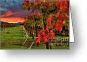 "\""sunset Photography Prints\\\"" Greeting Cards - Compelling Greeting Card by Mars Lasar"