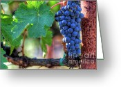 Grapevines Greeting Cards - Complete Cabernet Greeting Card by Mars Lasar