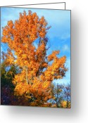 Blue Leaves Greeting Cards - Complimentary Colors Greeting Card by Michael Putnam