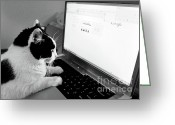 Black And White Cat Greeting Cards - Computer Cat Greeting Card by Andee Photography