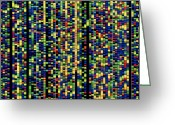 Dna Greeting Cards - Computer Screen Showing A Human Genetic Sequence Greeting Card by David Parker