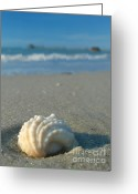 Seashell Art Photo Greeting Cards - Conch Shell Greeting Card by Juergen Roth