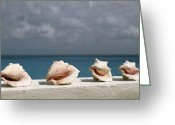 Sea Wall Greeting Cards - Conch Shells Line A Wall Near The Sea Greeting Card by Michael Melford
