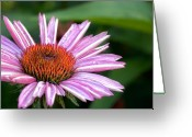Purple Flower Greeting Cards - Cone Flower Greeting Card by Bill  Wakeley