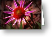 Morning Mist Images Greeting Cards - Coneflower 3 Greeting Card by Judi Bagwell