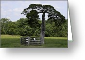 Cedar Fence Greeting Cards - Confederate Grave of Lafayette Meeks Appomattox Virginia Greeting Card by Teresa Mucha