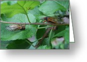 Cicadas Greeting Cards - Confusion Greeting Card by Charles Gramberg