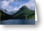 Tree-covered Greeting Cards - Conifer-covered Coastline Of Warm Greeting Card by Konrad Wothe
