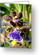 Franklin Park Conservatory Digital Art Greeting Cards - Conservatory Orchids Greeting Card by Mindy Newman